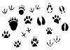 Vektor Cliparts: Tierspuren und Tracks