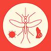 Mücke Aedes, zika Virus und schwangere Frau.