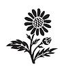 Leucanthemum (Margerite) Silhouette