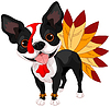 Thanksgiving-Boston Terrier