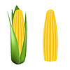 Corn cob with green leaves | Stock Vector Graphics