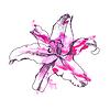 Von Hand gezeichnet Lily | Stock Vektrografik