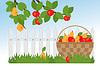 Obstkorb und Zweig der Apfel- und Birnbäume in