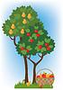 Apfel- und Birnbäume