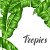 Background with banana leaves. decorative tropical | 向量插图