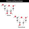 Векторный клипарт: Рибоза и дезоксирибоза структуры