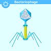 Векторный клипарт: Вирус ДНК бактериофага