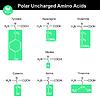 Aminosäuren mit markierten Reste, polar ungeladenen | Stock Vektrografik