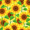 Bright seamless pattern with flowers sunflowers | Stock Vector Graphics