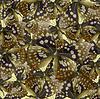 나비의 원활한 패턴 | Stock Vector Graphics