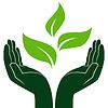 Zielonych roślin w rękach człowieka | Stock Vector Graphics