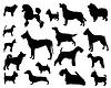 Dog breeds | 向量插图