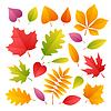 Векторный клипарт: Набор красочные осенние листья