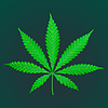 Векторный клипарт: марихуана марихуана реалистичное