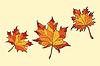 Vektor Cliparts: Ahornblätter rot