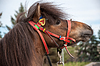 Home horse outdoors | Stock Foto