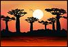 Векторный клипарт: Баобаб деревья