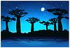 Векторный клипарт: Баобаб деревья в ночное время