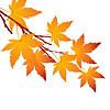 Vektor Cliparts: Herbstblatt Ahornzweig