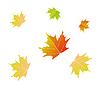 Векторный клипарт: кленовые листья