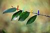 생태학에 미래의 비관적 인 성격 | Stock Foto