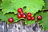 115 red currant berries on a background of green | Stock Foto