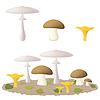 Häufige Arten von essbaren Pilze