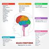 Векторный клипарт: Анатомия человека и функции мозга
