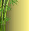 Grüner Bambus auf gelben Hintergrund