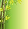 Grüner Bambus auf grünem Hintergrund