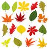 Sammlung von verschiedenen autumn leaves