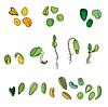 Set mit verschiedenen Samen