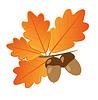 Eicheln mit Eiche Blätter im Herbst Objekte