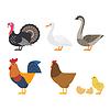 Reihe von bunten Bauernhof Vogel-Symbole