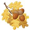 Векторный клипарт: желуди желтые