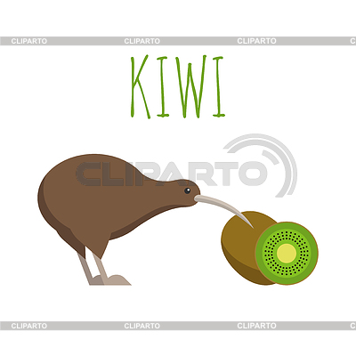 Kiwi Bird Fruit Diagram | Gallery