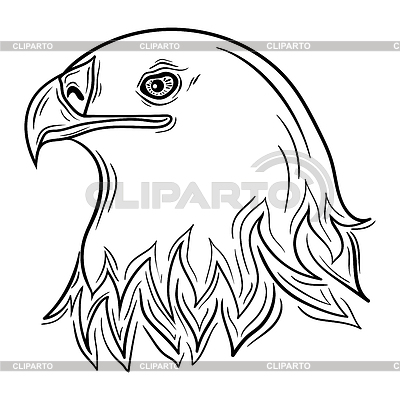 Hawk | Fotos Stock y Clipart vectorial EPS | CLIPARTO / 4